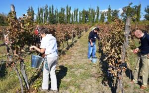 1. Rtveli - celebrating grape harvest